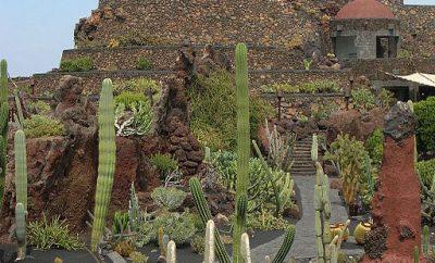 The Jardin de Cactus